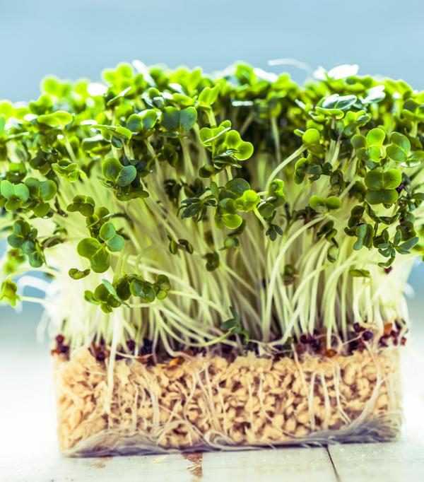 Microplante și flori comestibile