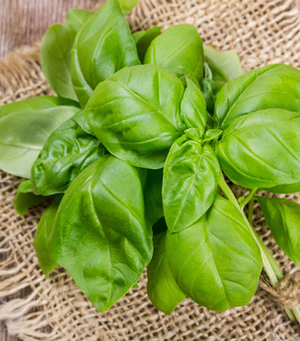 Plante aromatice proaspete